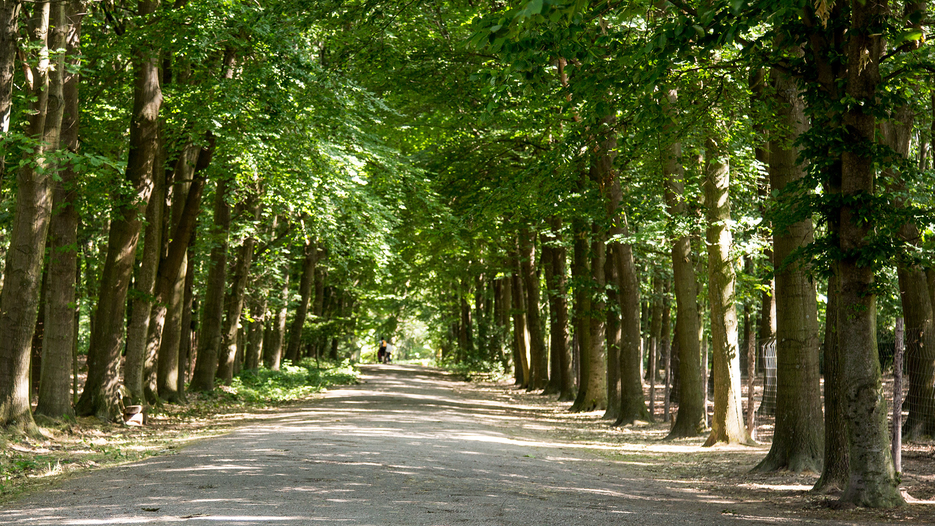Header-panorama-Allee